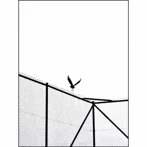 BasketSahası_03-500x500.jpg