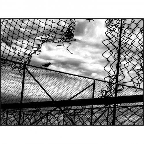BasketSahası_10-500x500.jpg